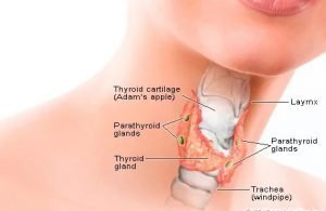Can Thyroid Tests Be Wrong