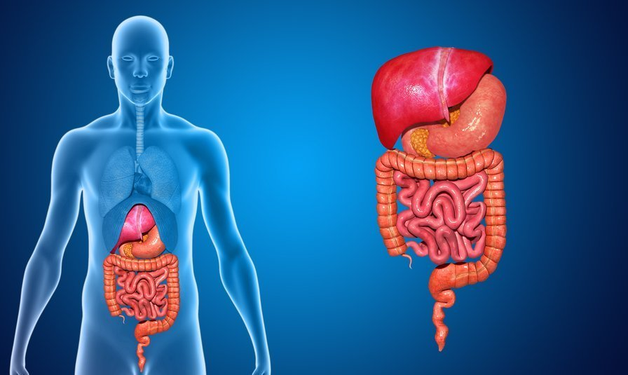 Your Gut Might Be The Reason You are Depressed!