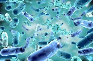 probiotics and gut health