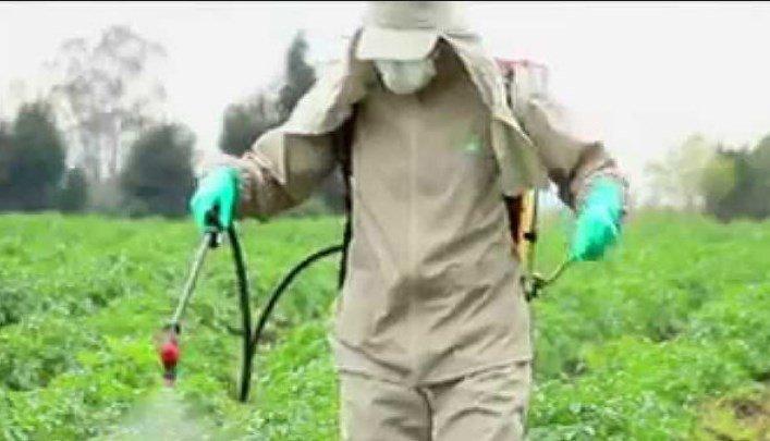 Glyphosate in Cereal Report