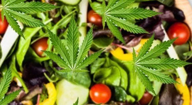 Superfoods and Plants With Cannabinoids