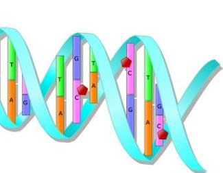 Epigenetics inheritance examples