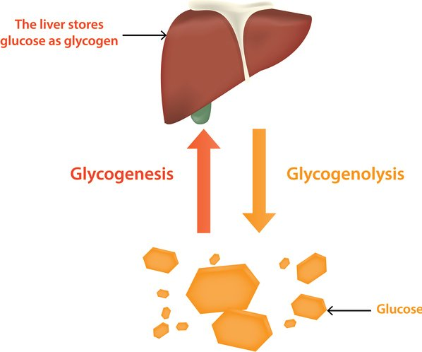 Carbohydrate Digestion Begins In The