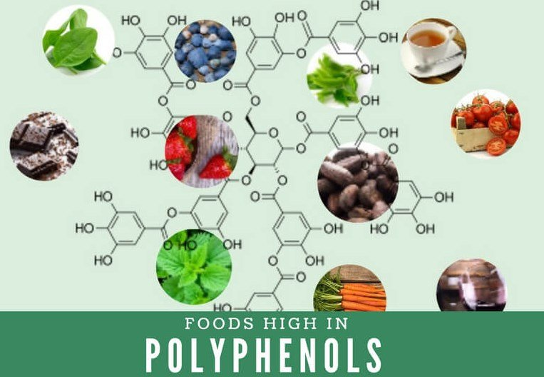 What Are Polyphenols