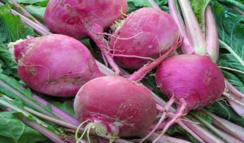 Turnip nutrition data